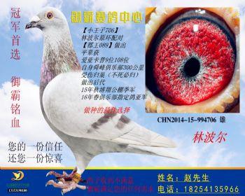 CHN201415994706雄