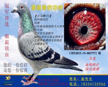 CHN2015150037572雌
