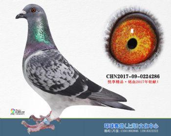 上海环球-吉-286