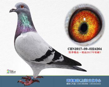 上海环球-吉-264