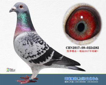 上海环球-吉-282