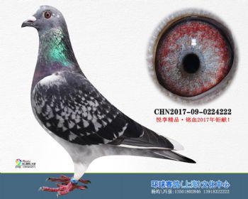 上海环球-吉-222
