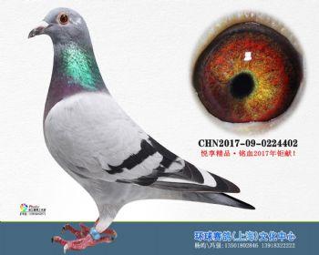上海环球-吉-402