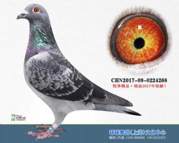 上海环球-吉-268