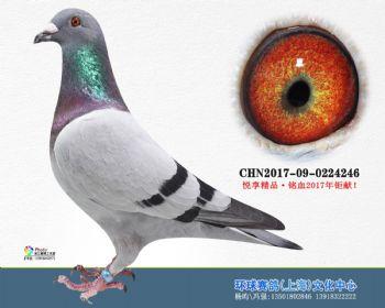 上海环球-吉-246