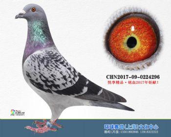上海环球-吉-296