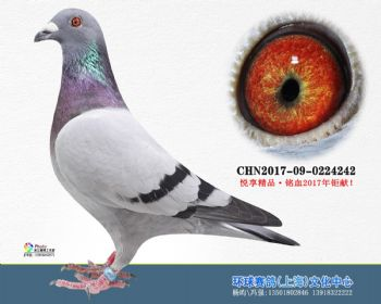 上海环球-吉-242