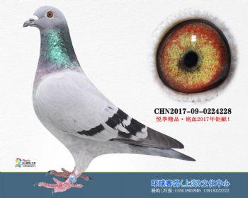 上海环球-吉-228