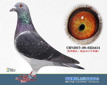 上海环球-吉-414