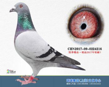 上海环球-吉-216
