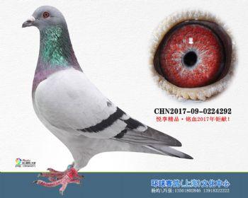 上海环球-吉-292