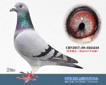 上海环球-吉-248