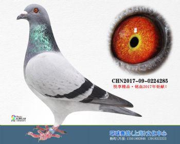 上海环球-吉-285