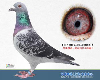 上海环球-吉-214