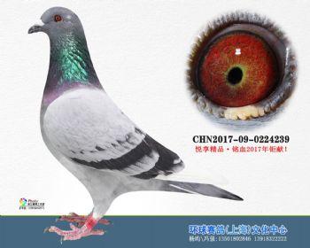 上海环球-吉-239