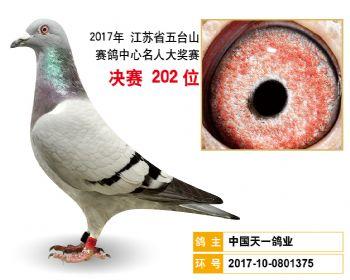 江苏五台山决赛202名