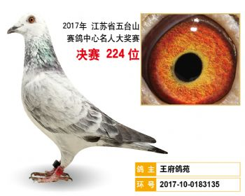 江苏五台山决赛224名