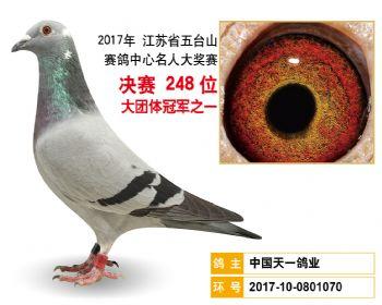 江苏五台山决赛248名