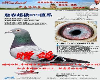 荷兰海尔曼·比佛丹姆授权精典詹森经典拍卖 - 信鸽