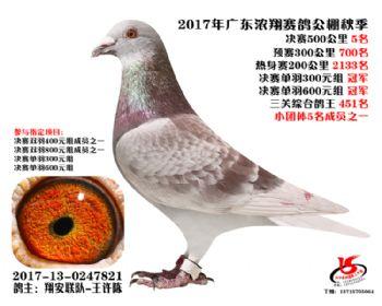 广东浓翔获奖鸽5名