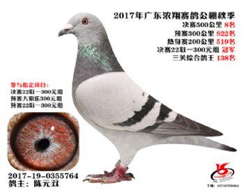 广东浓翔获奖鸽8名
