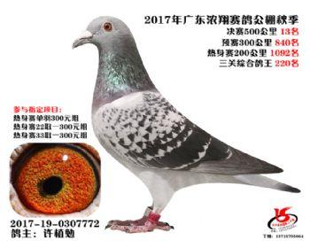 广东浓翔获奖鸽13名