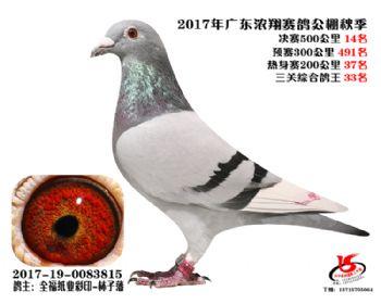 广东浓翔获奖鸽14名