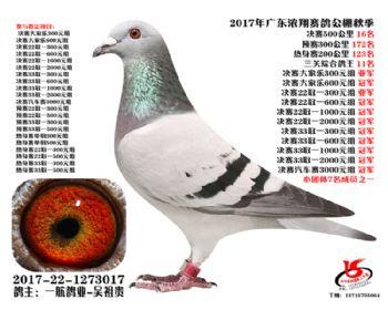 广东浓翔获奖鸽16名