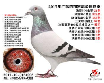 广东浓翔获奖鸽21名