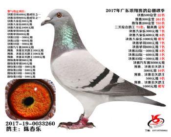 广东浓翔获奖鸽22名