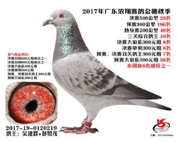 广东浓翔获奖鸽23名