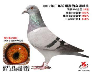 广东浓翔获奖鸽25名