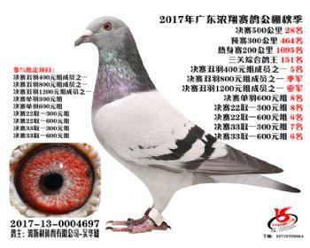 广东浓翔获奖鸽28名