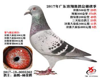 广东浓翔获奖鸽29名