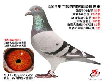 广东浓翔获奖鸽30名