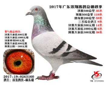 广东浓翔获奖鸽35名