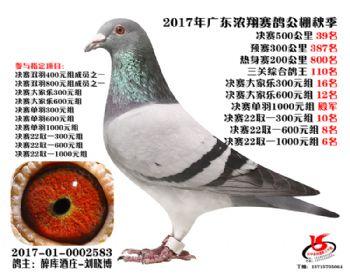 广东浓翔获奖鸽39名