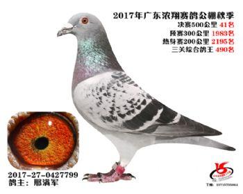 广东浓翔获奖鸽41名