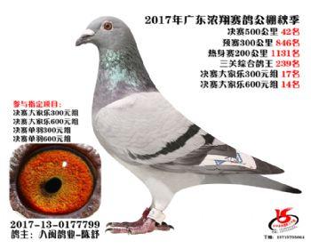 广东浓翔获奖鸽42名