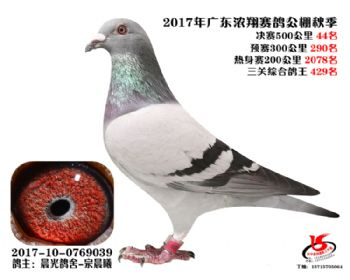 广东浓翔获奖鸽44名