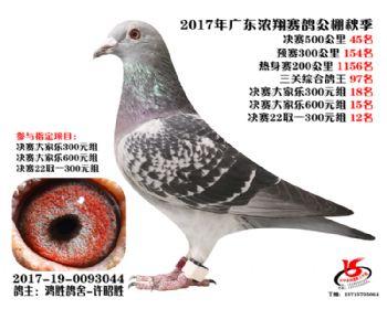 广东浓翔获奖鸽45名