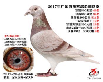 广东浓翔获奖鸽46名