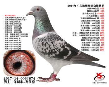 广东浓翔获奖鸽47名