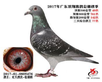 广东浓翔获奖鸽49名