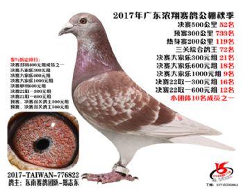 广东浓翔获奖鸽52名