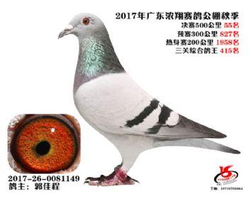 广东浓翔获奖鸽55名