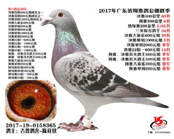 广东浓翔获奖鸽63名