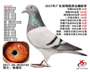 广东浓翔获奖鸽65名