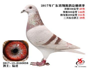 广东浓翔获奖鸽67名