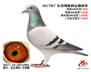 广东浓翔获奖鸽68名